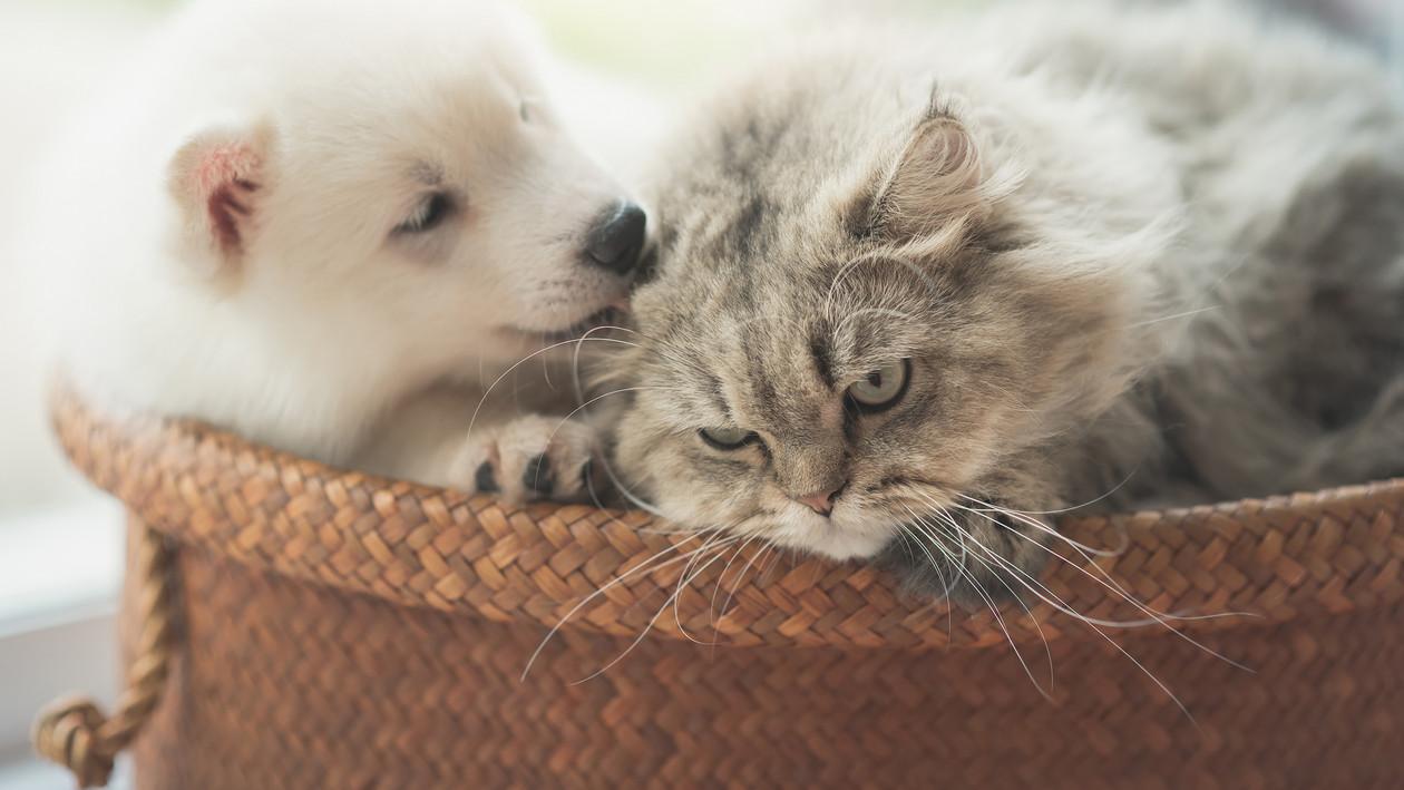 Katzenurin Entfernen Sos Tipps Für Katzenhalter