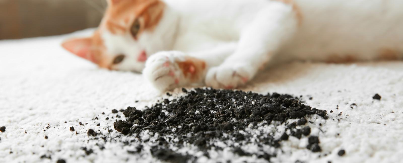 flecken im teppich stunning flecken aus teppich entfernen genial teppich flecken entfernen with. Black Bedroom Furniture Sets. Home Design Ideas