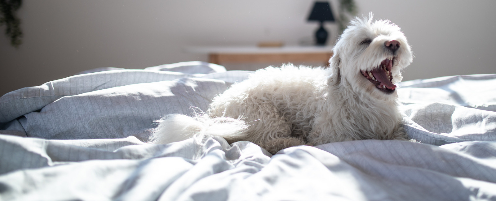 Allergiefreie hunderassen