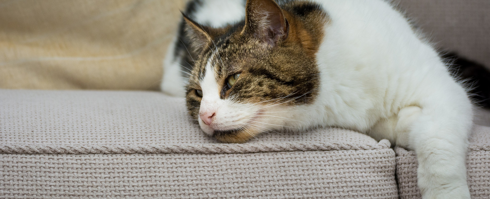 Katzenhaare Entfernen katzenhaare entfernen hausmittel die wirklich helfen