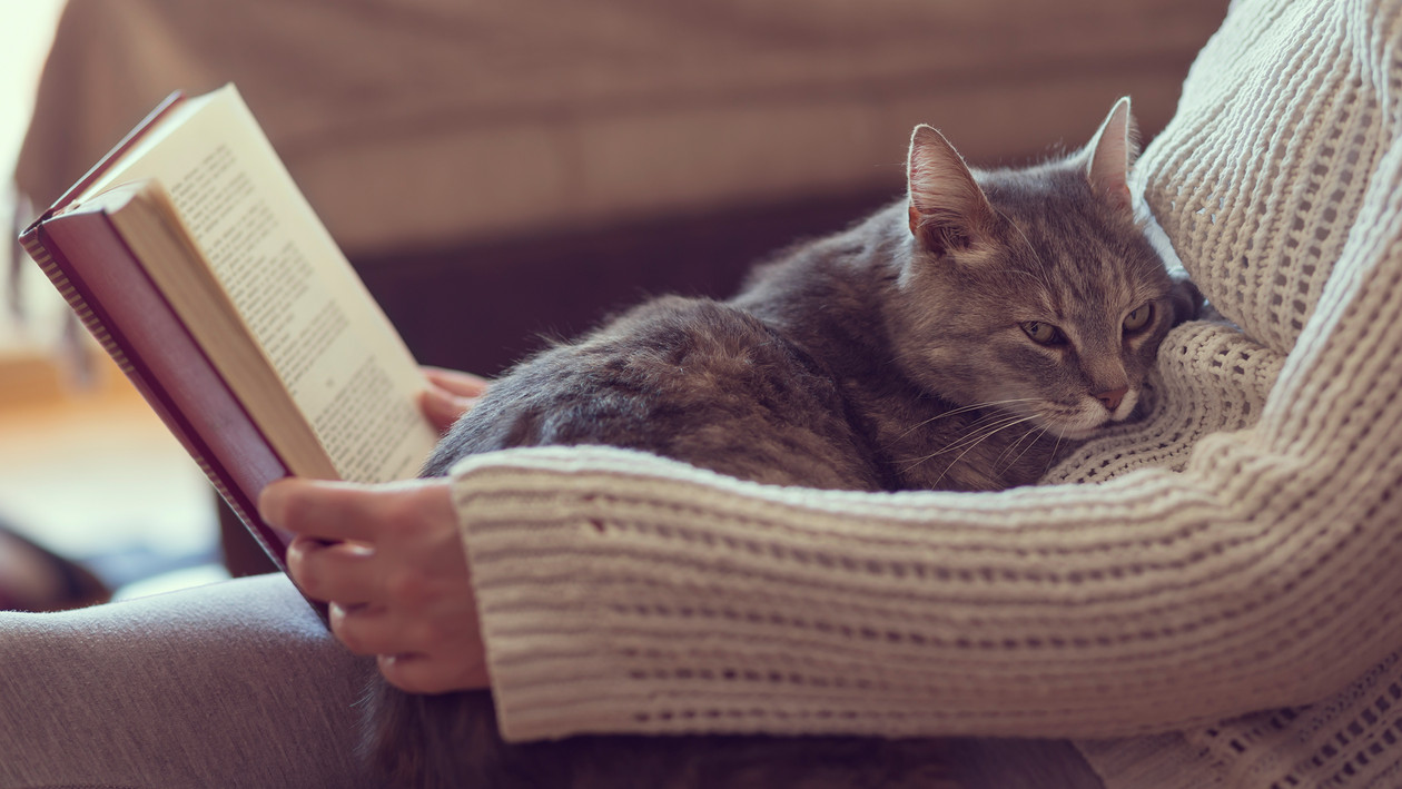 Katzenhaare Entfernen anwendungstipps für den umgang mit ihrem haustier